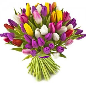 זר פרחים טוליפים Exclusive