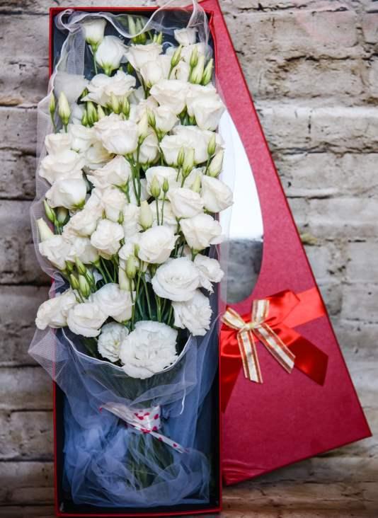 קופסת פרחים קורל
